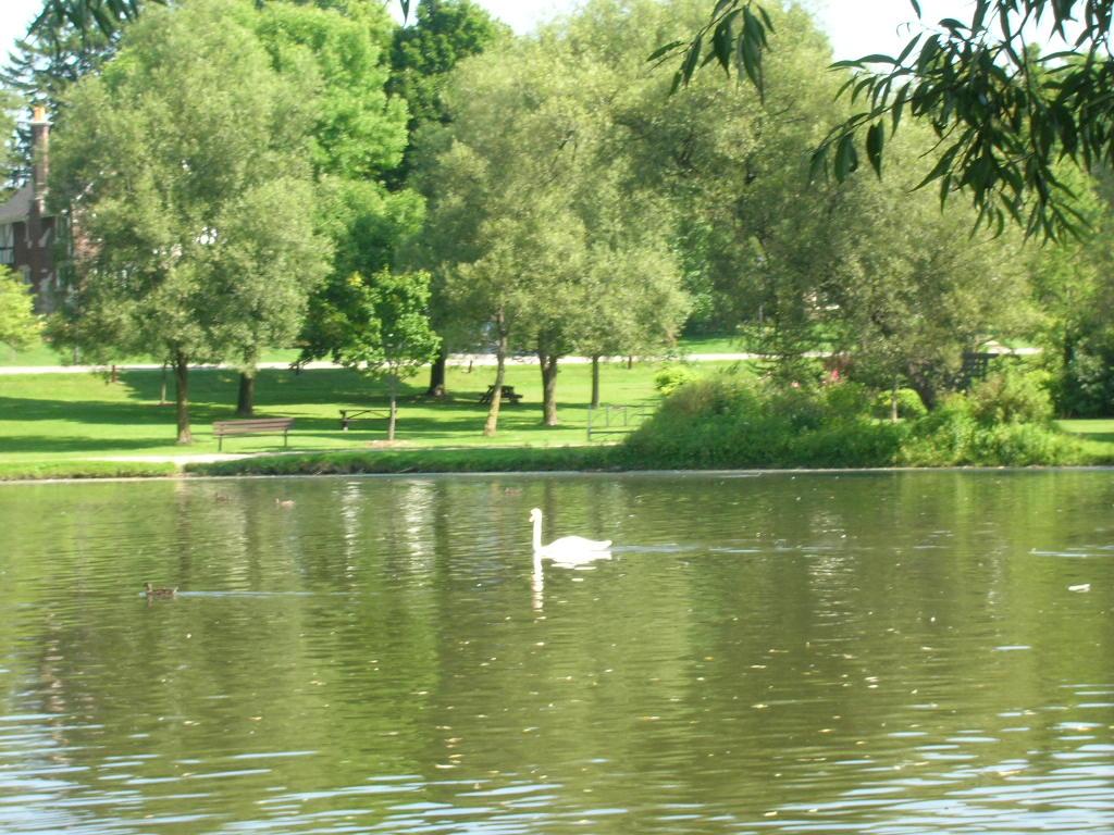 4. Swan