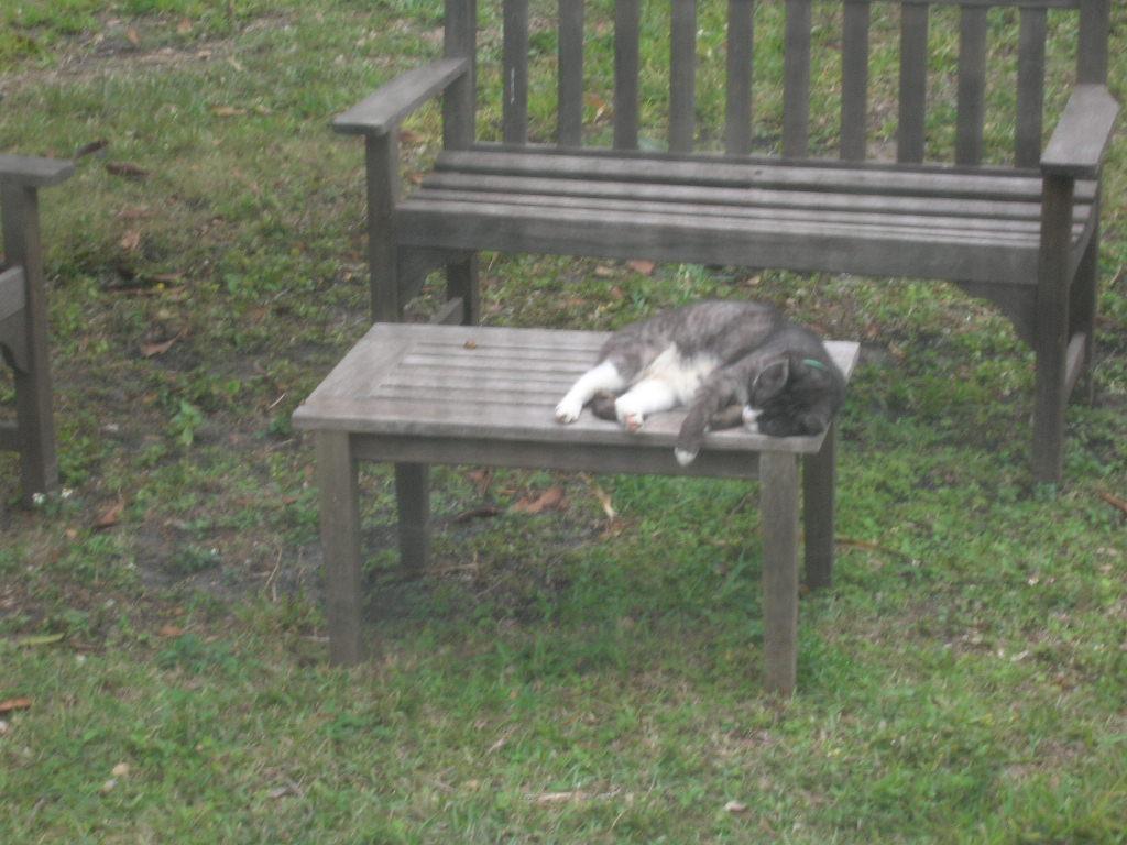 Rainy Cat
