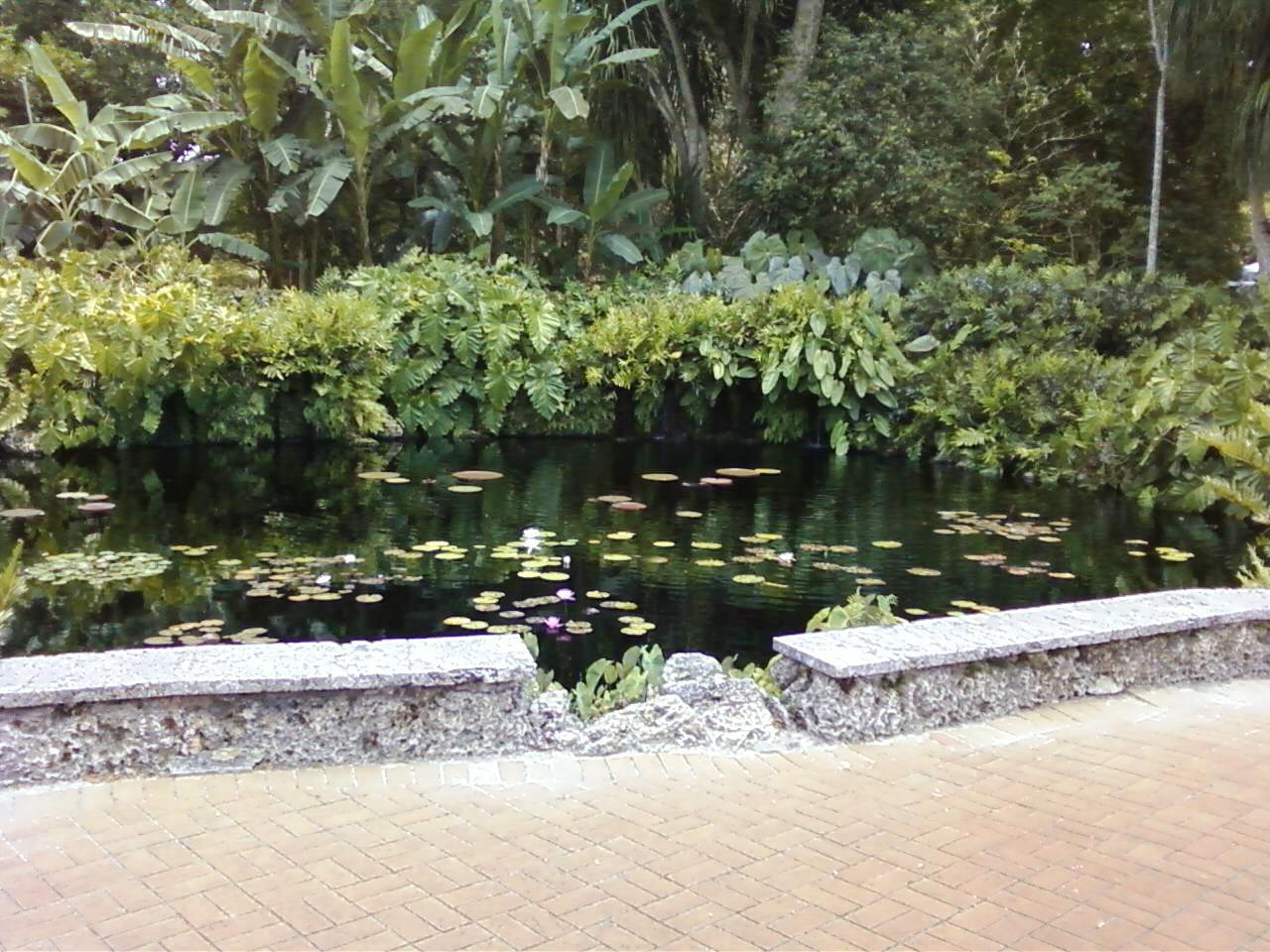 Lily pond at Fairchild Tropical Botanic Gardens.