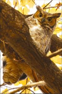 Owl Be Watching You - 01-05-16