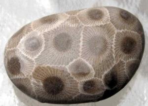 petoskey-stone-11-10-16